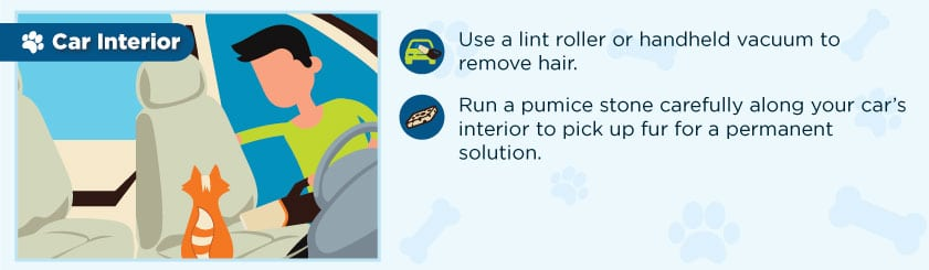 remove_pet_hair_from_car