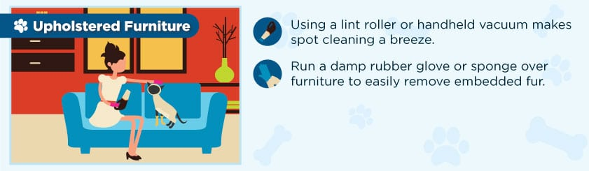 remove_pet_hair_from_furniture