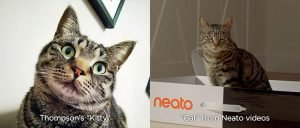 Thompson's Kitty vs. Neato's Cat